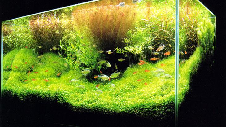refaire un aquarium eau douce